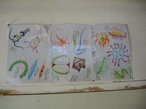 DSCN26041 300x225 Help ons met planktonvisnetten maken op 12 maart