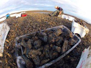 een wereld vol oesters op de Waddenzee2 web 300x225 AndersWad: feest van de streek op 5 november bij 'tAiland Lauwersoog